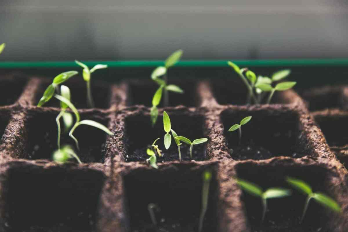Organic Garden Tips For Beginners