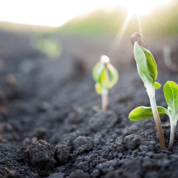 When Do You Need to Be Adding Organic Matter to Your Soil