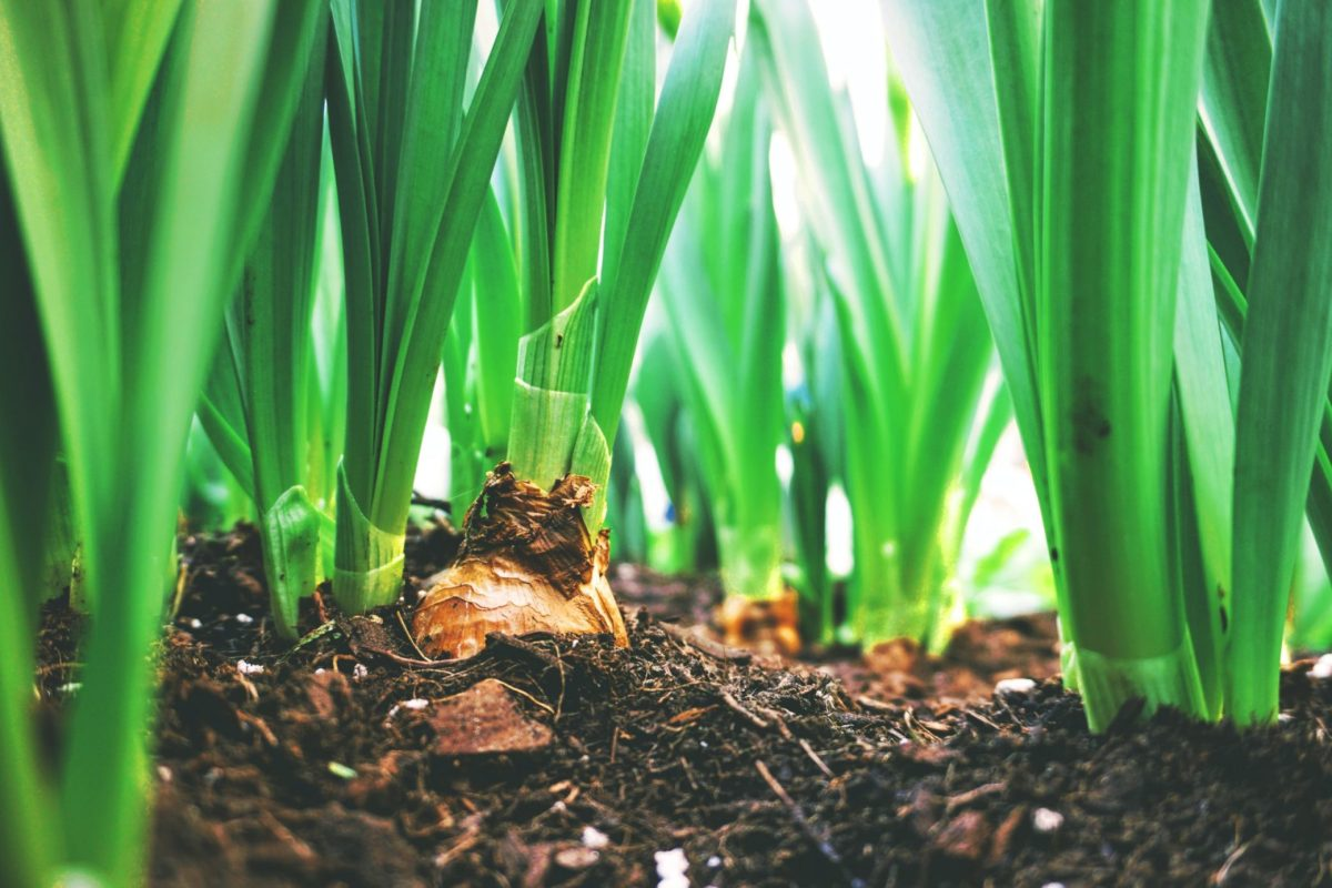 weeding your vegetable garden