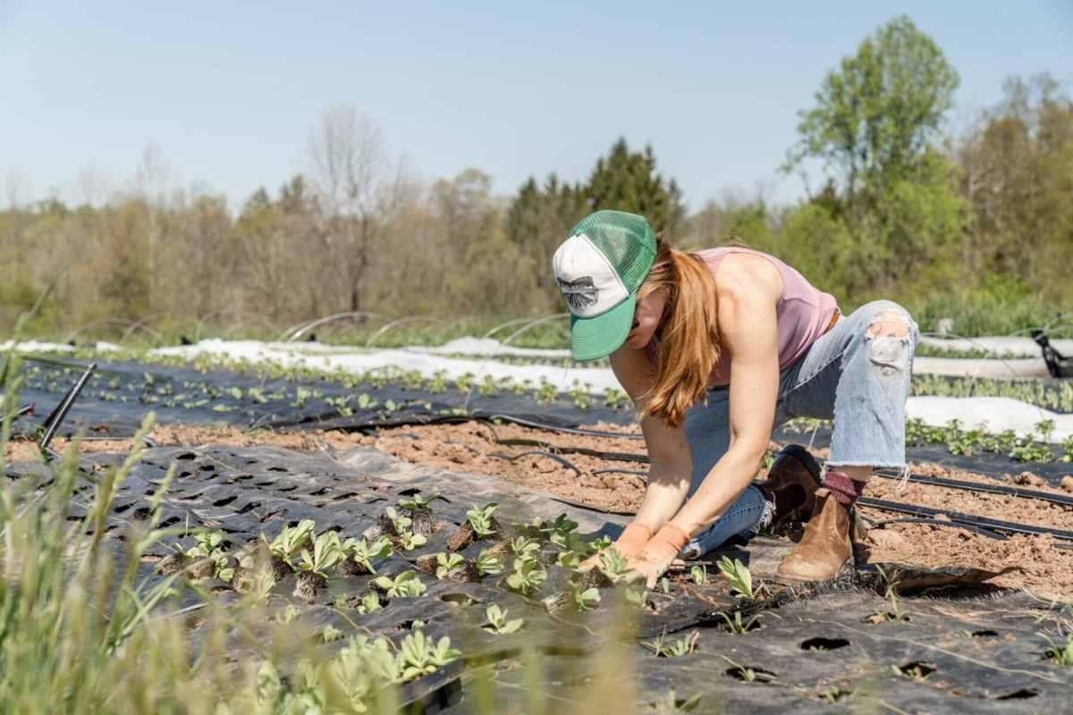 Organic Gardening Easier