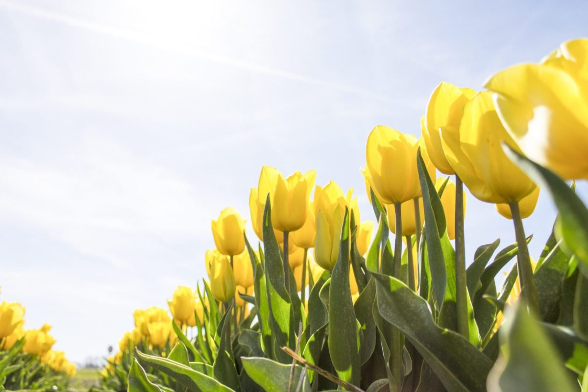 flowering bulbs