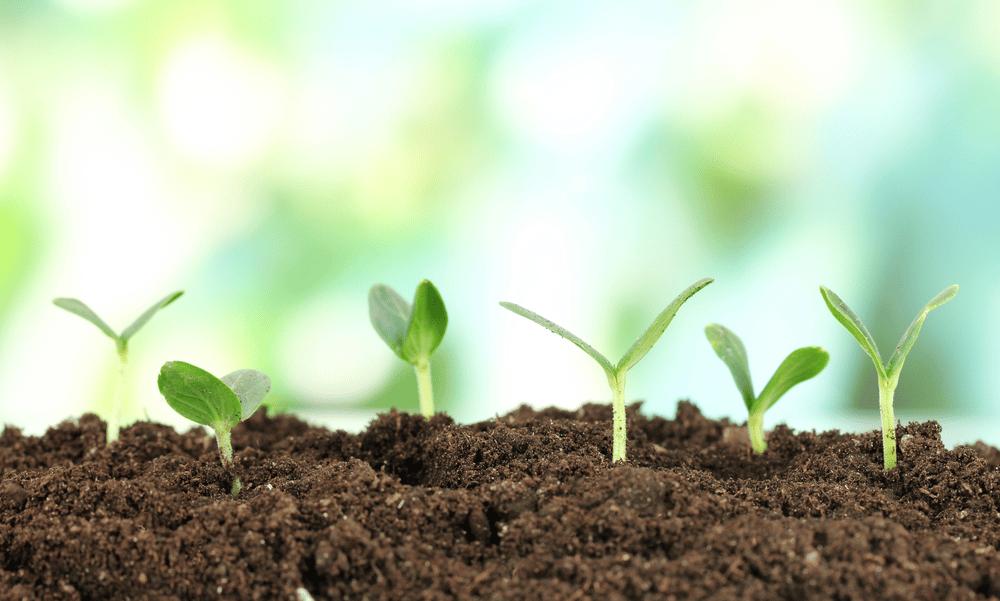 Best Organic Fertilizers for 2021