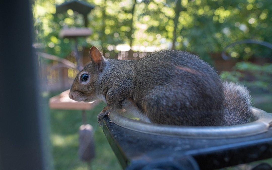 Squirrel & Dog