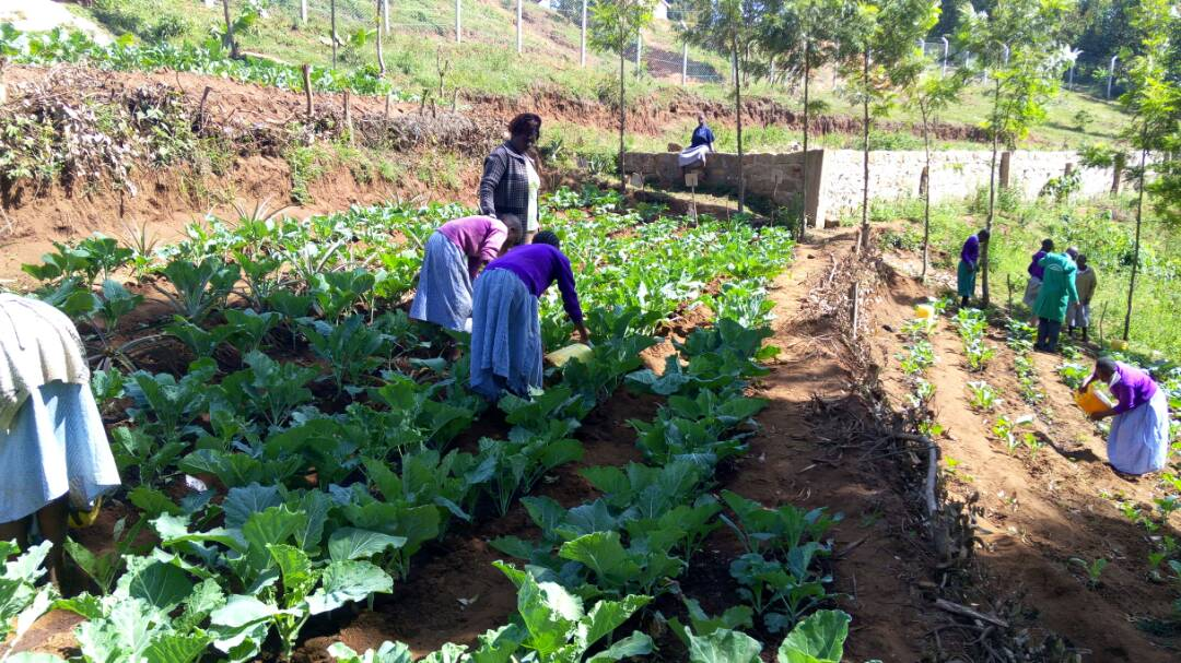 Budding farmers implementing their favorite vocation