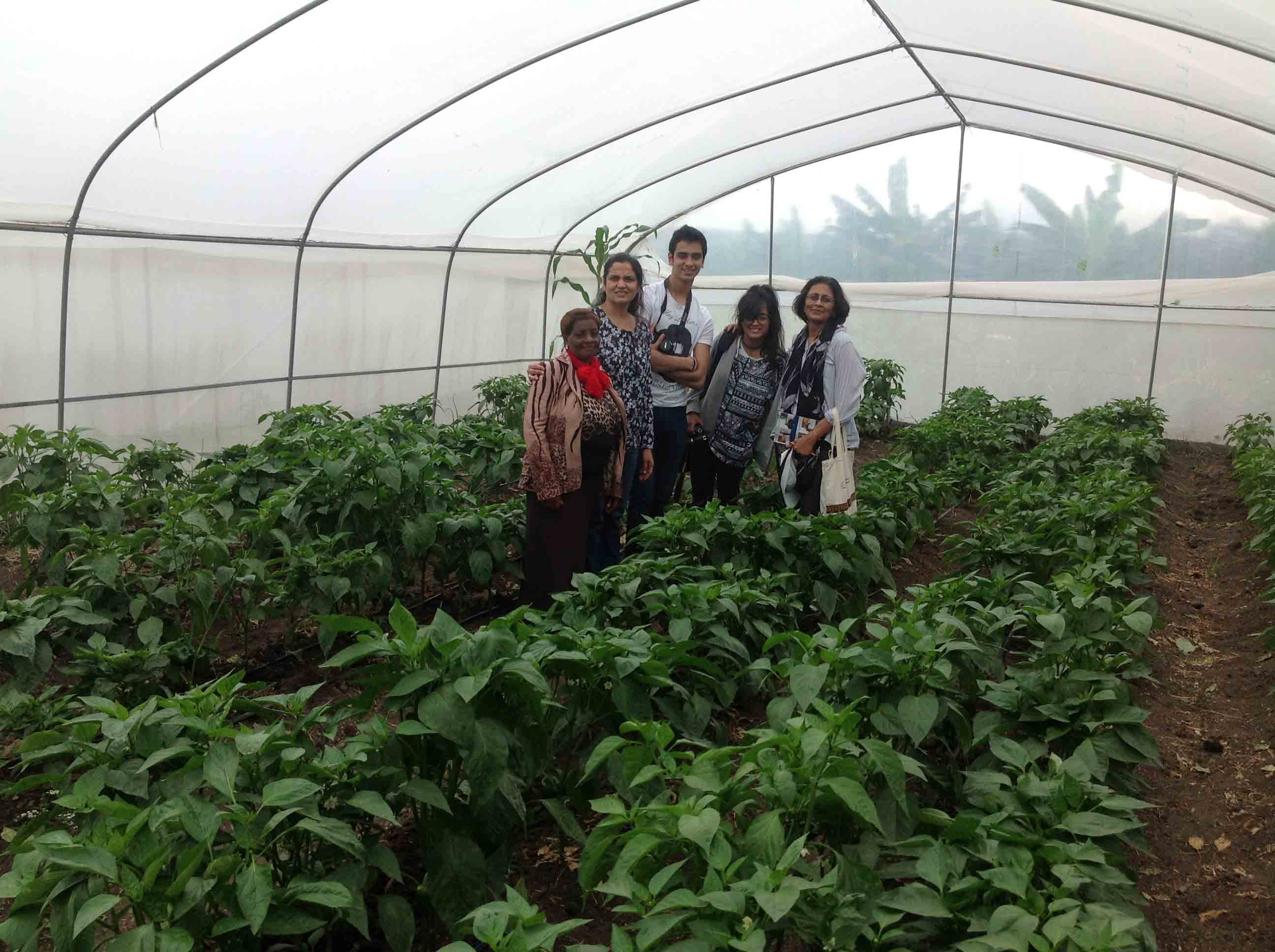 Greenhouse-used-to-cultivate-and-sell-tomatoes-and-capsicums