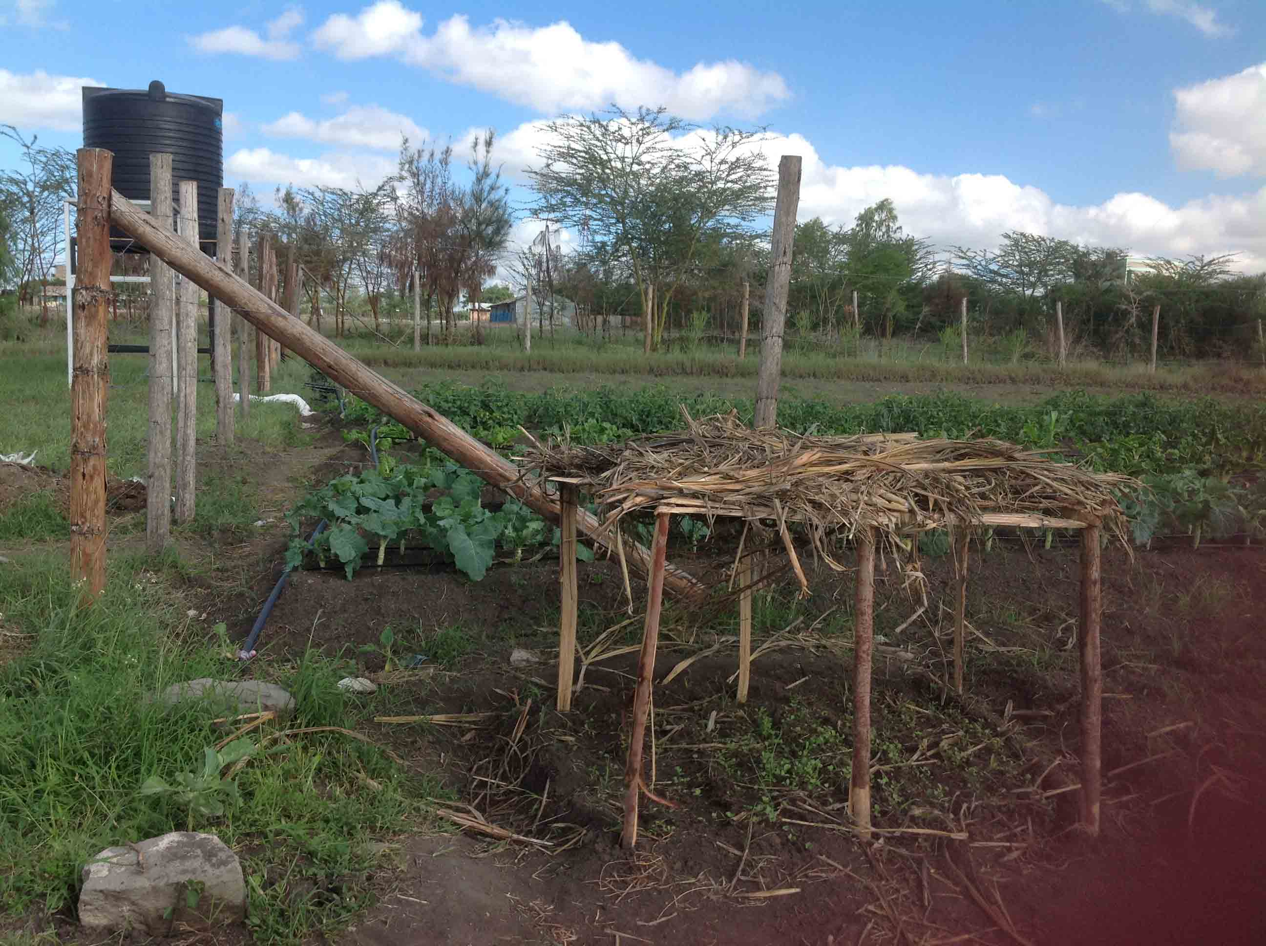 water-tank-and-drip-irrigation-set-for-the-vegetable-garden