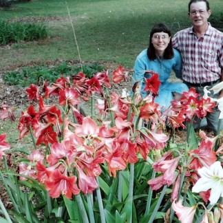 Dellwood Garden Amaryllis Bulb Varieties