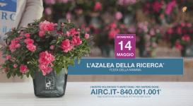 AIRC l'azalea della ricerca