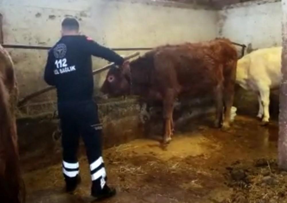 Amasya'da 112 ekibi, karantinadaki yaşlı kadının ineklerini besledi