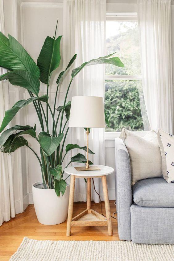 accessori styling d'interni - piante