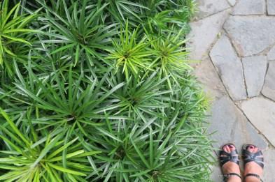 07-singapore -botanic-gardens-path