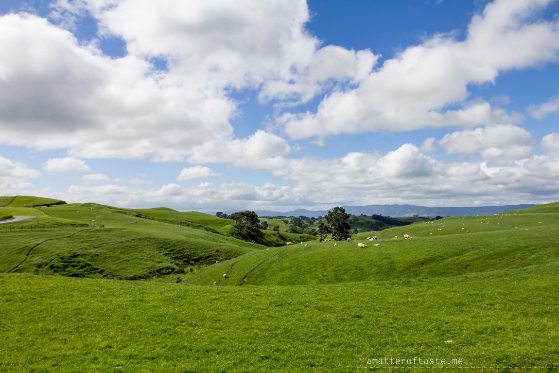 hobbiton sheep farm