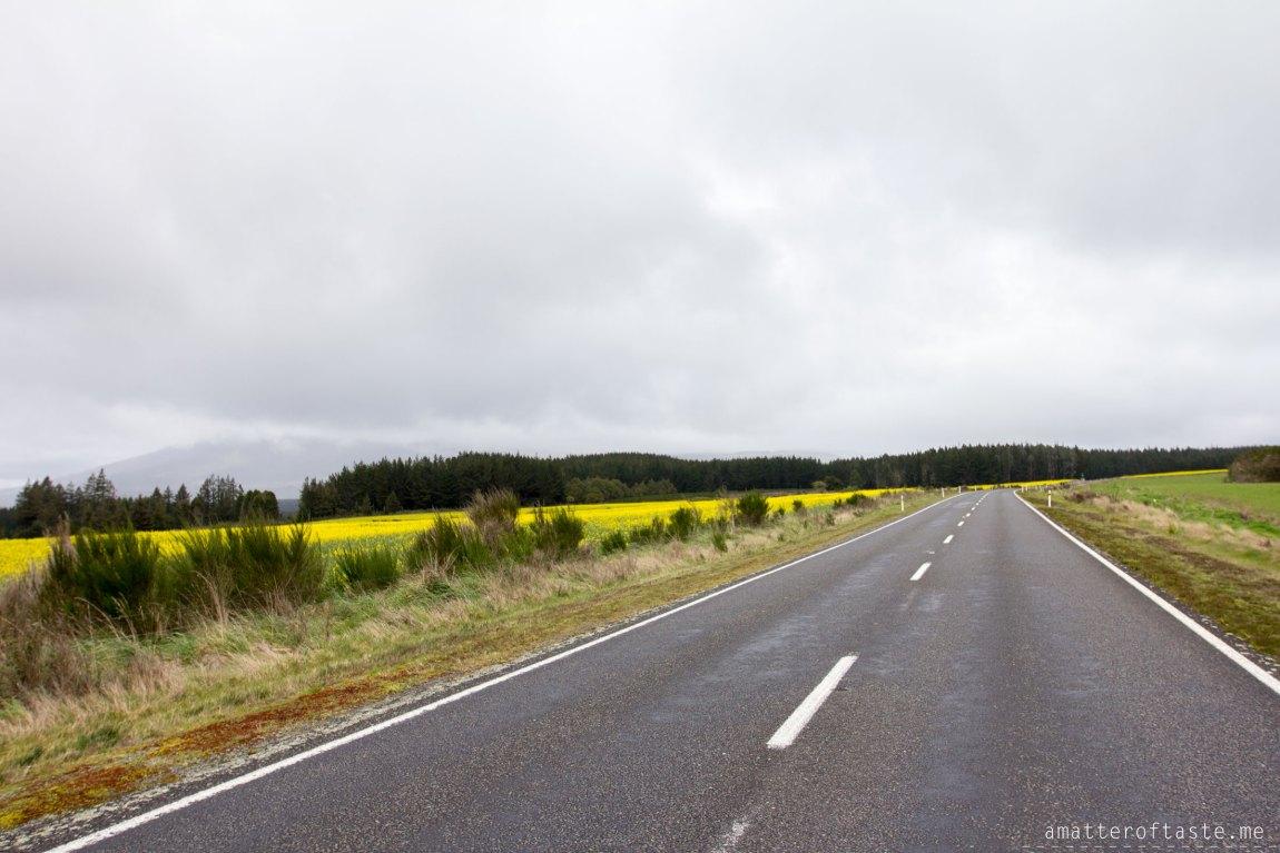 Tongariro - Road