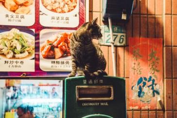 Jioufen cat