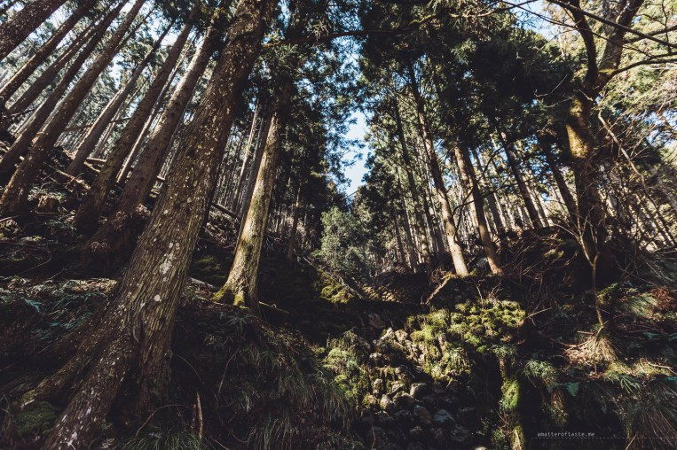 Kurama-dera Temple hike forest
