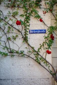 Lindau Germany road trip street roses