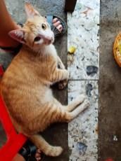Saigon district 4 cat