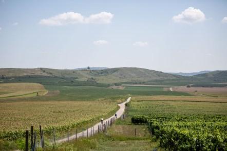 Tractor vineyards south moravia Czech Republic bikes