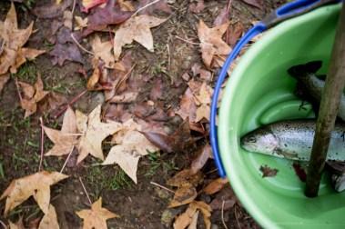 bright-trout-farm-fishing-catch