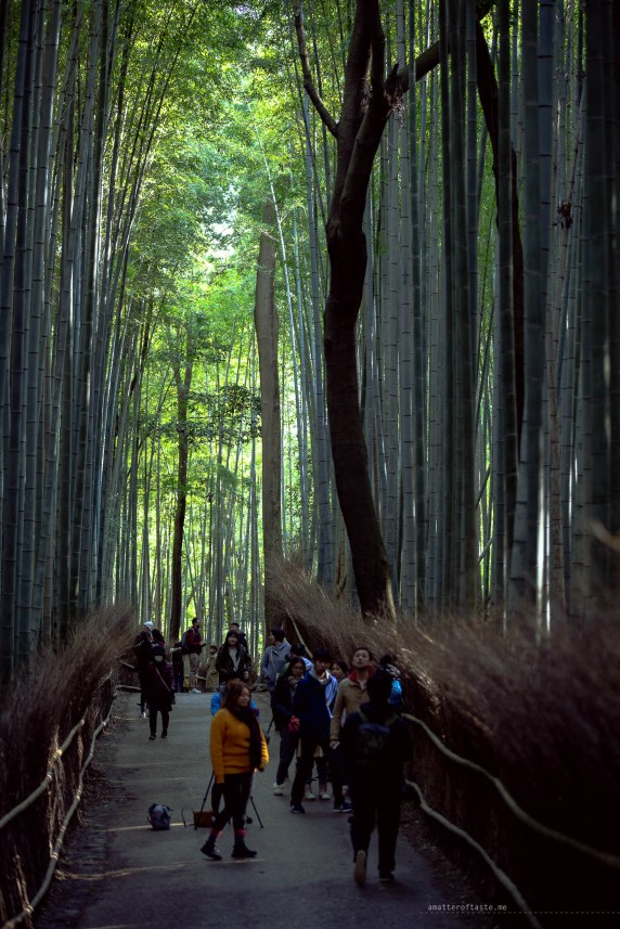 kyoto tourists bamboo forest