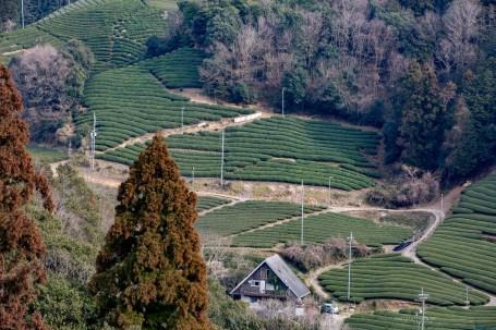 wazuka kyoto tea plantations town