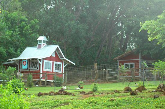 Leilani Farm Sanctuary of Maui