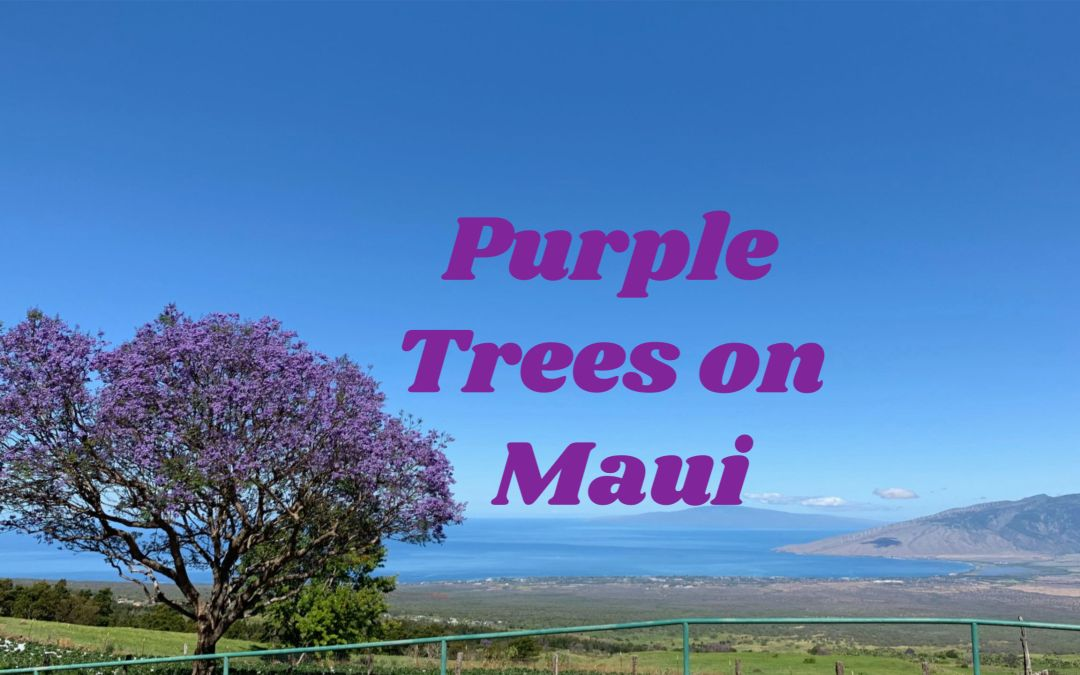 The Purple Trees on Maui Hawaii