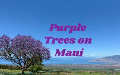 The Purple Trees on Maui Hawaii