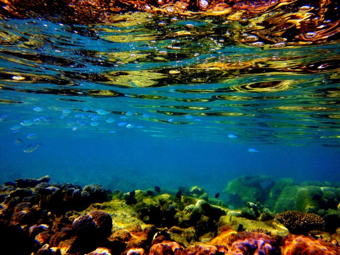 At the risk of losing a limb, I snapped this photo in Exmouth as we drifted in sea kayaks over a coral outcrop about 500m from shore.