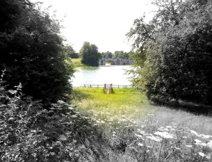 This charming view from the abandoned picnic ground at the base of a cliff I fortuitously tumbled down at Blenheim Palace was a joy to behold.