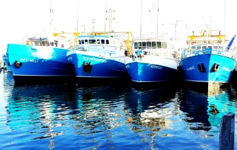 These boats moored in Fishermens Harbour Fremantle looked delightful as e enjoyed our meal of fish and chips by the water.