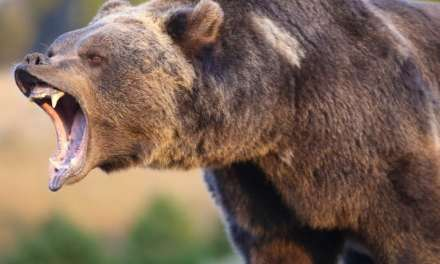 Markets Update: Bears Return to Crypto Markets for Some Action