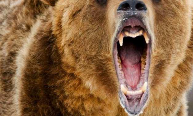 BTC Hashpower Doubles During Bear Market as Miners Sacrifice Profit for Position