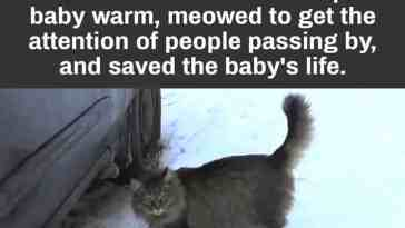 Cat saved an abandoned baby