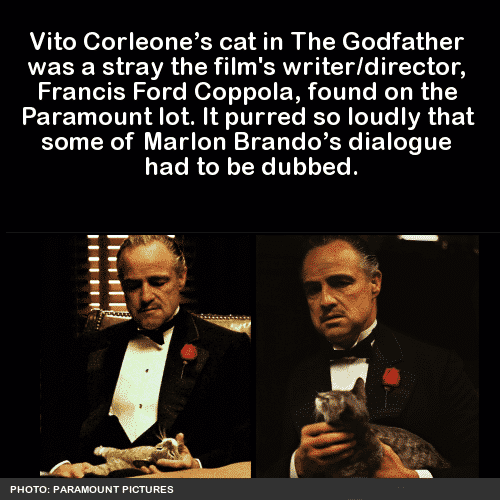 Amazing fact about godfather