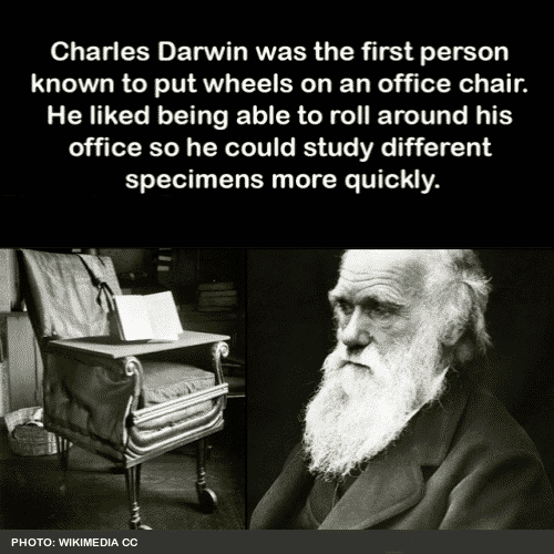 Charles Darwin innovat office chair with wheels