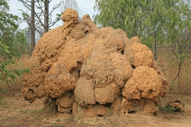 Termite mounds in Australia
