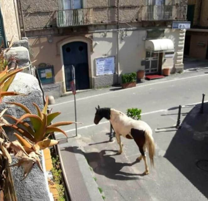 During the quarantine horse is in streets