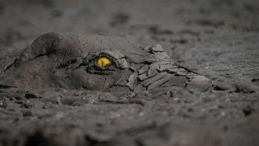 GDT Nature Photographer 2020 first position in other animal category The danger in the Mud