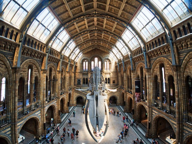 Natural History Museum in London virtual tour online
