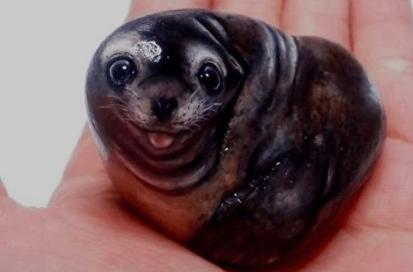 Artist Paints Found Stones That Look Like Real Seals And I Hope They Make You Smile