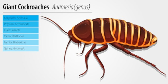 Giant Cockroaches science explain