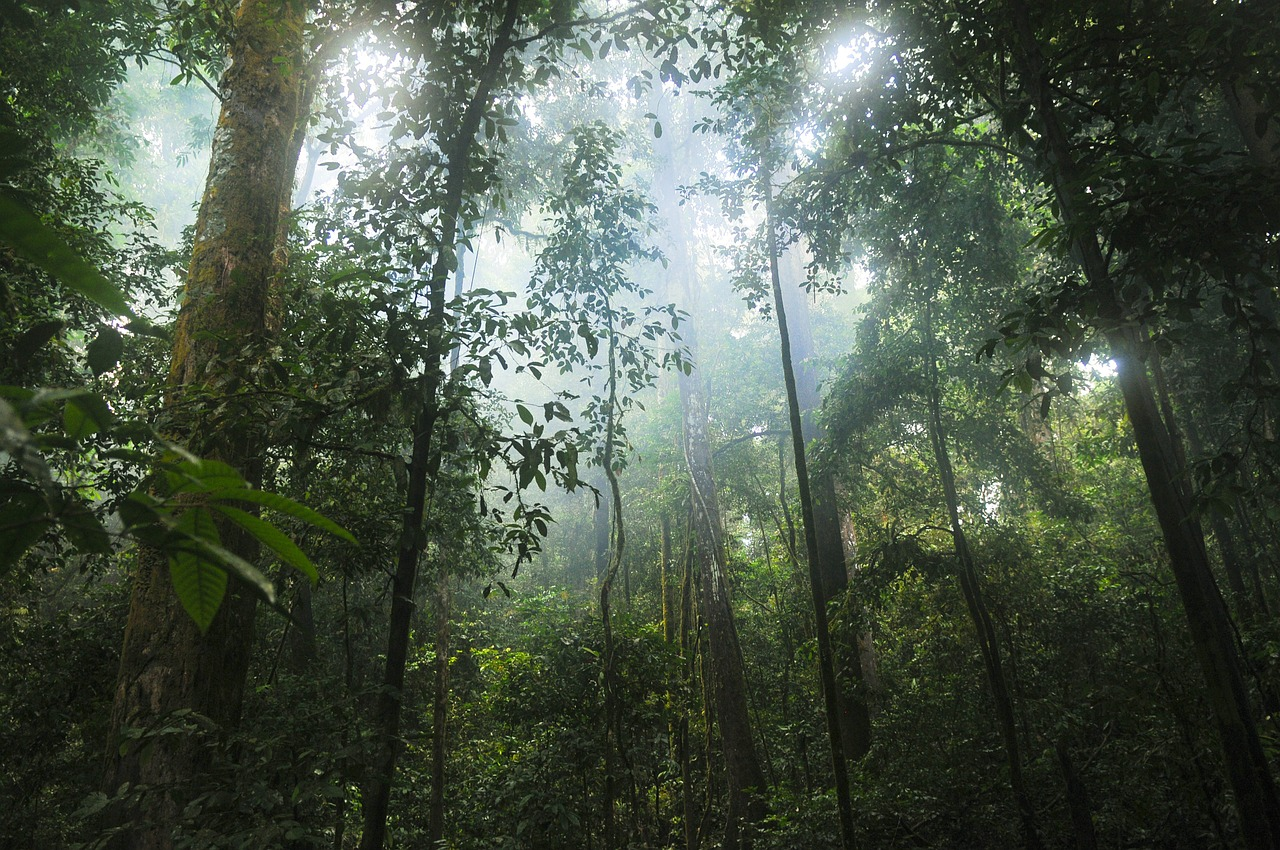 10 Amazing Facts About Rainforests That Will Blow Your