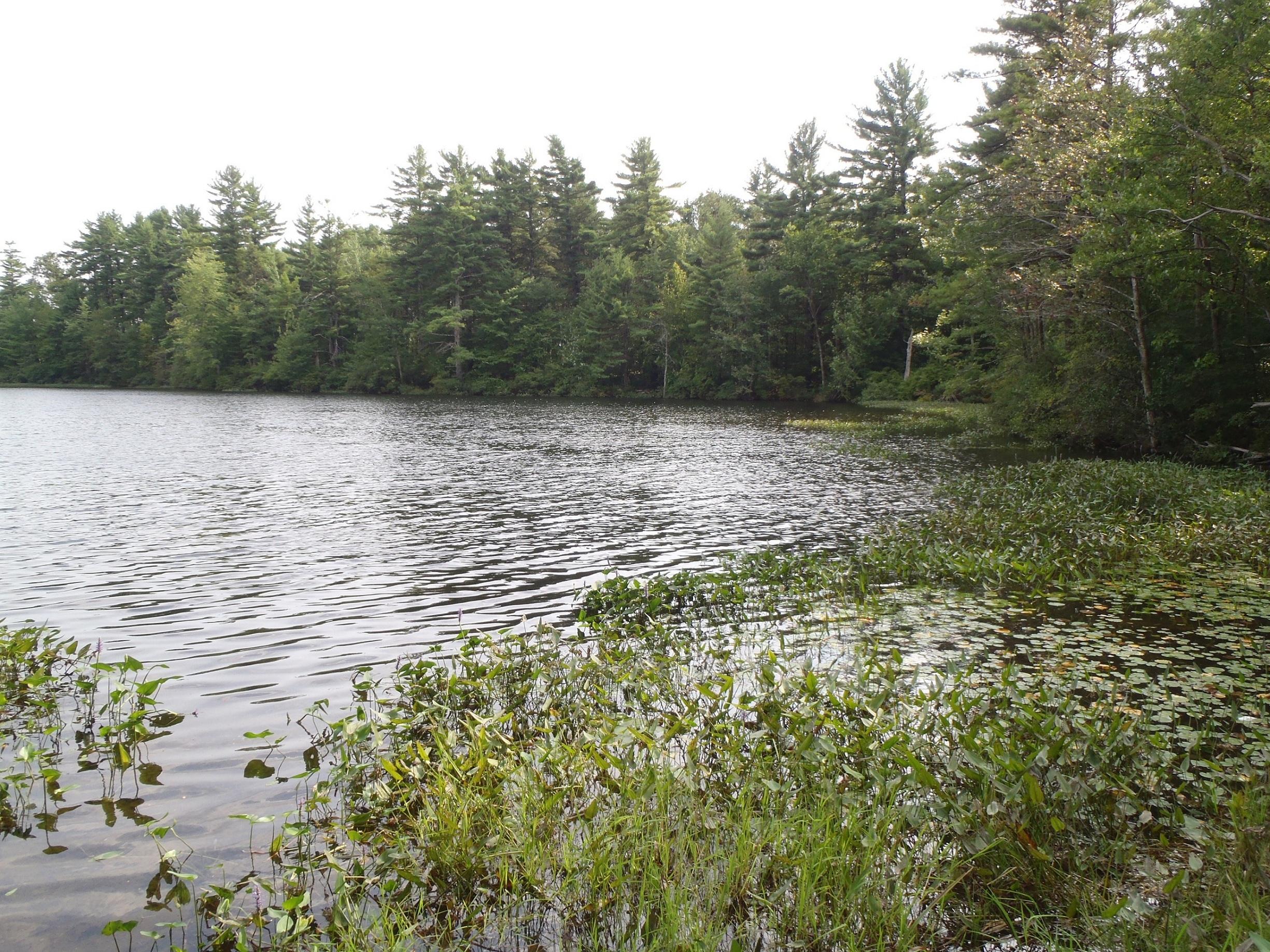 big fish little pond sanford