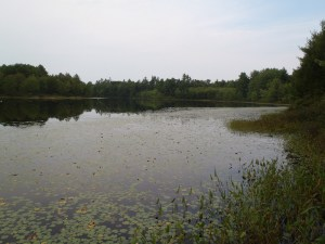 One last view along the shoreline of Little Watchic Pond