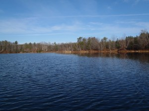 General view of Otter Pond #2 with the abandoned railroad tracks in the background (looking north)