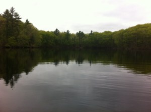 A quiet cove on Ell Pond