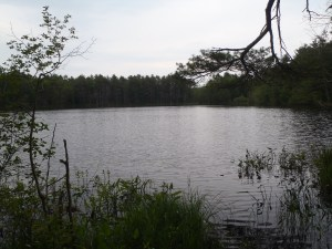 General view of Chaffin Pond