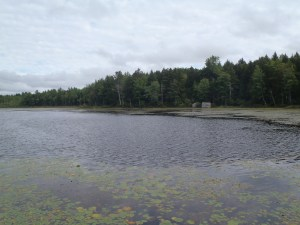 General view of Holts Pond