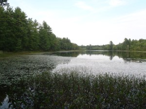Little Watchic Pond is completely surrounded by aquatic vegetation
